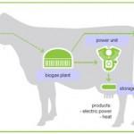 cow-biogas-plant